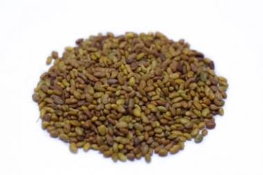 Alfalfa Keimsaat BIO ganz 500g