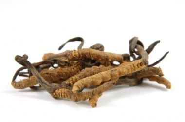 Cordyceps Raupenpilz Pulver 100g