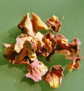 Rosenblütenblätter, dunkelrot 500g