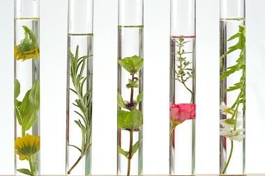 Kosmetisches Basiswasser 500ml