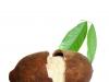 Cupuacu Butter unraffiniert