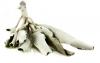 Weißer Salbei (Indianersalbei) 50g