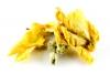 Königskerze Blüten ganz 100g