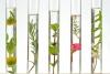Rosenwasser bulg. BIO 50ml Braunglas m. Sprühkopf