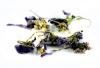 Veilchenblüte BIO 25g